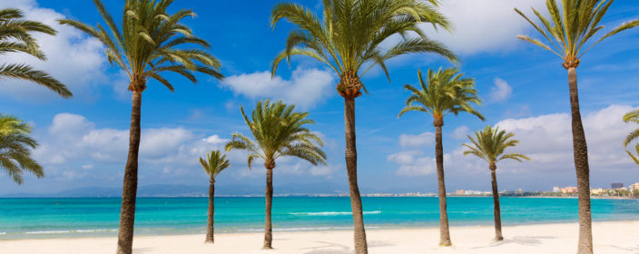Beach, Strand, Mallorca, Palm