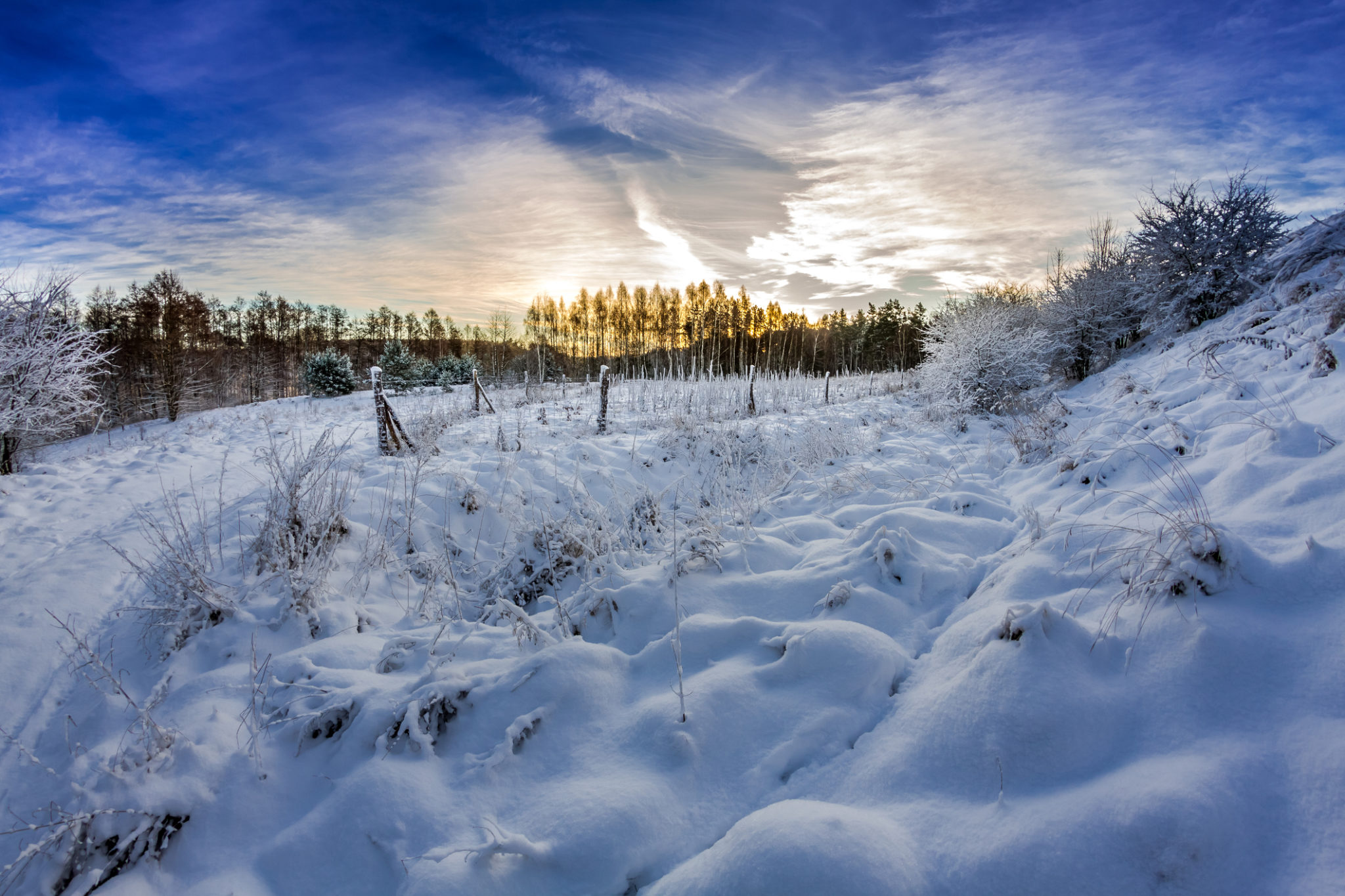 Forest path covered with snow at sunrise