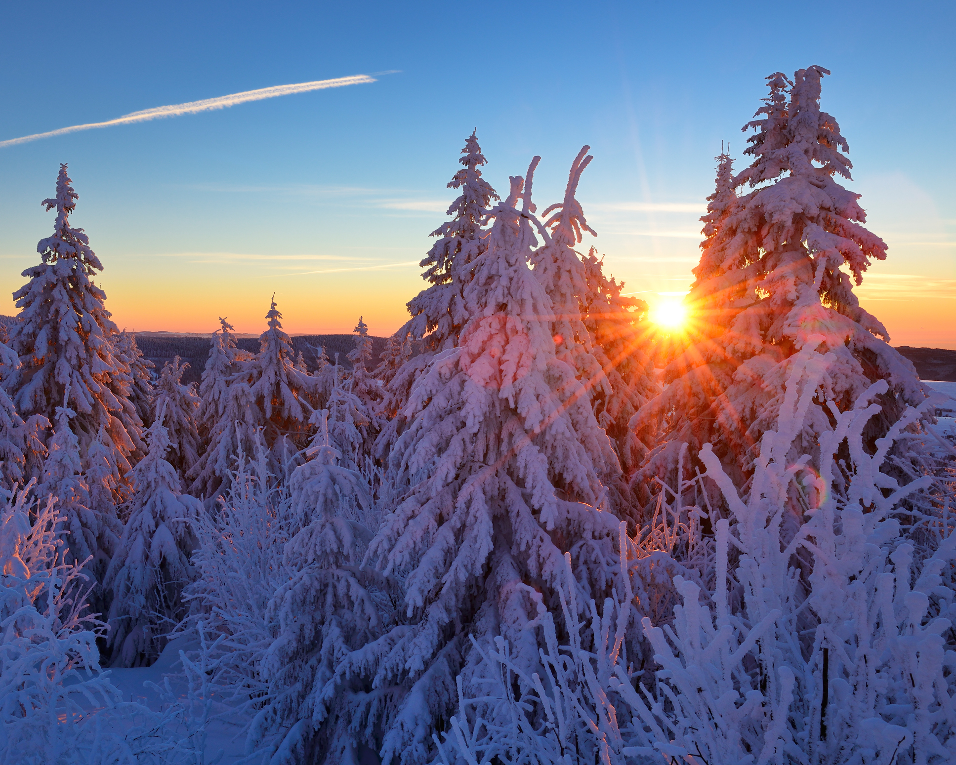 Winter Sunrise, Spruce Tree Forest Covered by Snow