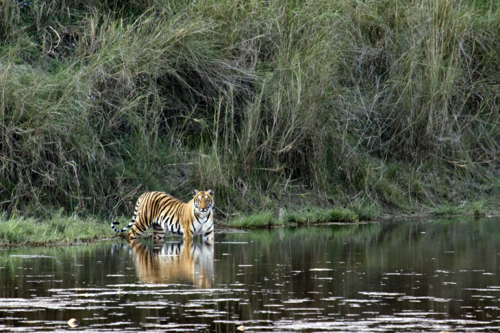 Chiwan Nationalpark in Nepal